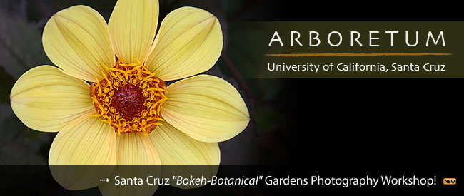 Santa Cruz Botanical Gardens Flower Photography Workshop
