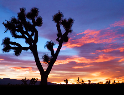 Joshua Tree Landscape Photography Workshop