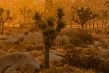 Joshua Tree Workshop